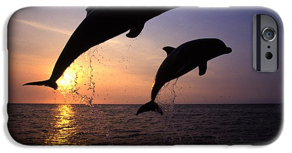 Bottlenose Dolphins IPhone 6s Case by Francois Gohier and Photo Researchers