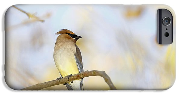 Cedar Waxwing On Yellow And Blue IPhone 6s Case by Susan Gary