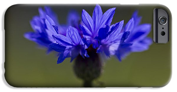 IPhone 6s Case featuring the photograph Cornflower Blue by Clare Bambers