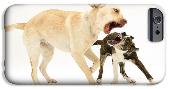 Dogs Playing IPhone Case by Mark Taylor