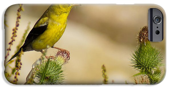 Goldfinch On Lookout IPhone 6s Case by Bill Pevlor