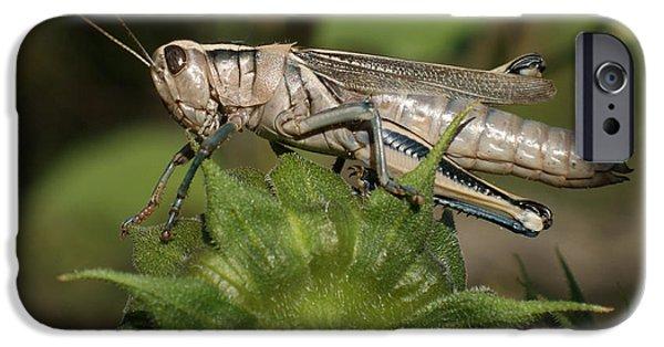 Grasshopper IPhone 6s Case by Ernie Echols