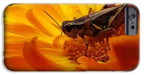 Grasshopper iPhone 6s Case - Grasshopper Luncheon by Lianne Schneider