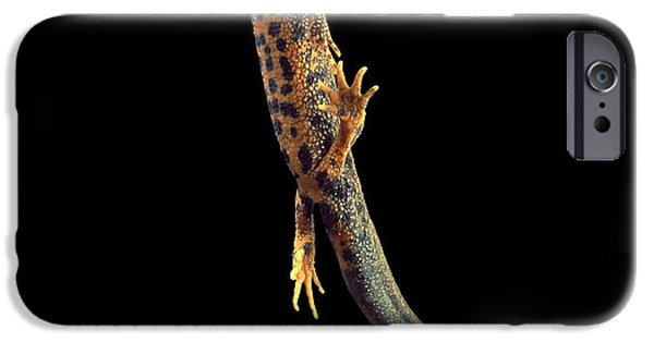 Newts iPhone 6s Case - Great Crested Newt by Andy Harmer