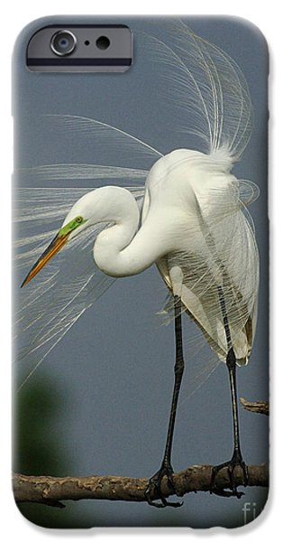 Great Egret IPhone 6s Case by Bob Christopher