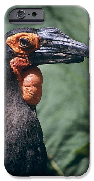 Ground Hornbill Head IPhone 6s Case by David Aubrey