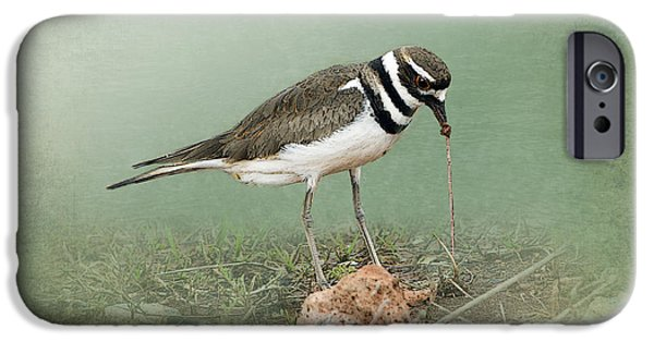 Killdeer And Worm IPhone 6s Case by Betty LaRue