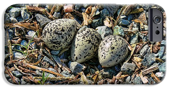 Killdeer Bird Eggs IPhone 6s Case by Jennie Marie Schell