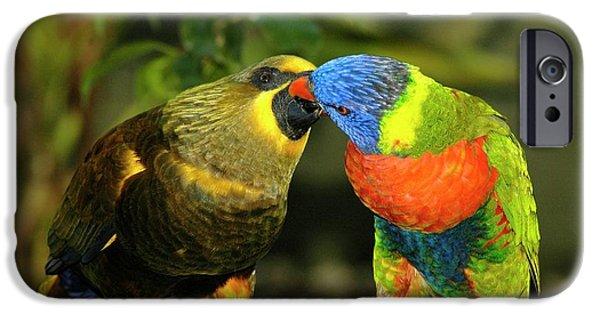 Kissing Birds IPhone 6s Case