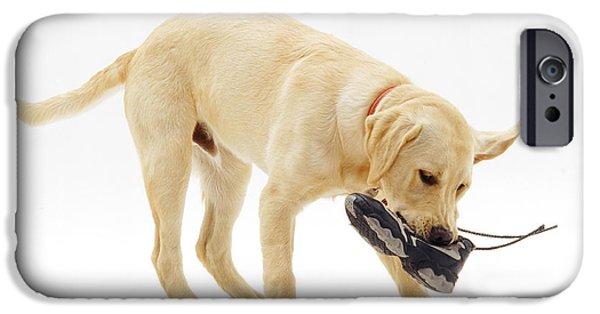Labrador X Golden Retriever Puppy IPhone Case by Jane Burton