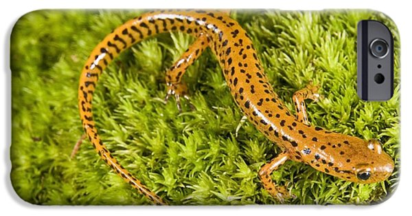 Longtail Salamander Eurycea Longicauda IPhone 6s Case by Jack Goldfarb