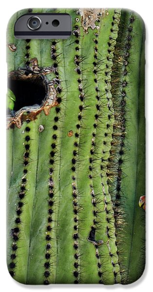 Lovebirds And The Saguaro  IPhone 6s Case by Saija  Lehtonen