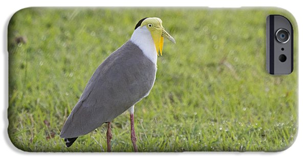 Lapwing iPhone 6s Case - Masked Lapwing by Douglas Barnard