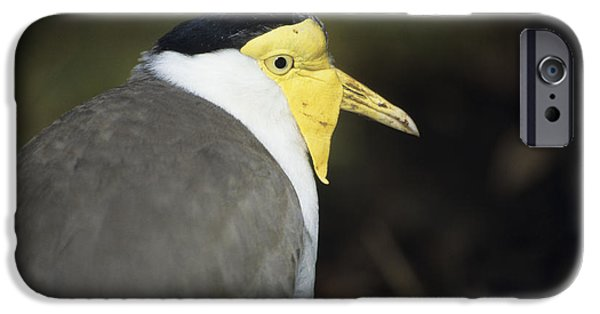 Lapwing iPhone 6s Case - Masked Plover by David Aubrey