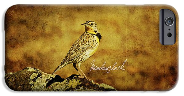 Meadowlark IPhone 6s Case by Lana Trussell