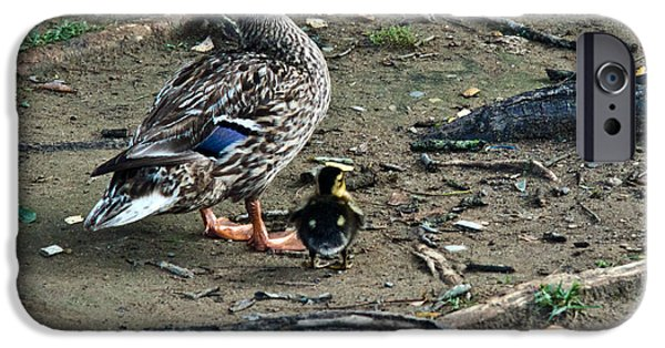 Gosling iPhone 6s Case - Mom And Duckling by Douglas Barnett