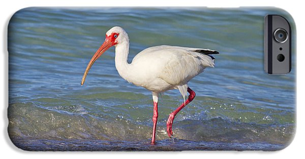 Ibis iPhone 6s Case - One Step At A Time by Betsy Knapp