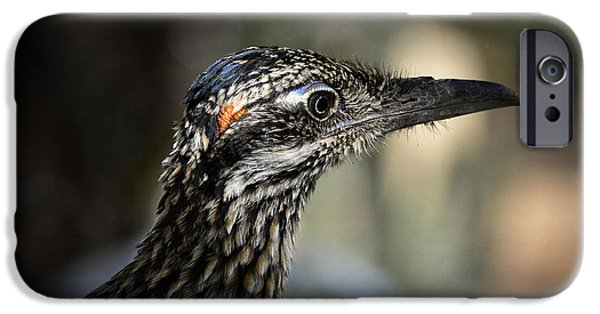 Portrait Of A Roadrunner  IPhone 6s Case