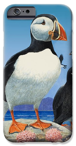 Puffin iPhone 6s Case - Puffins by R B Davis