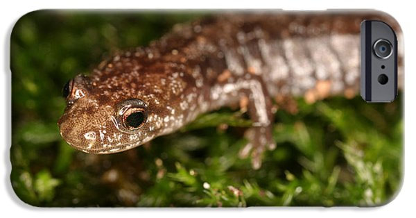 Red-backed Salamander IPhone 6s Case by Ted Kinsman