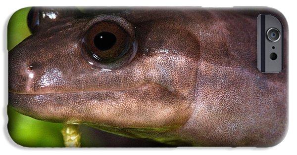 Red Hills Salamander IPhone 6s Case by Dant� Fenolio