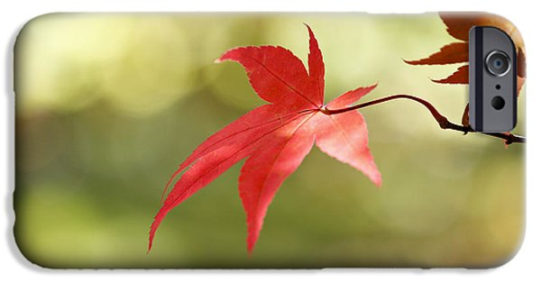 IPhone 6s Case featuring the photograph Red Leaf. by Clare Bambers