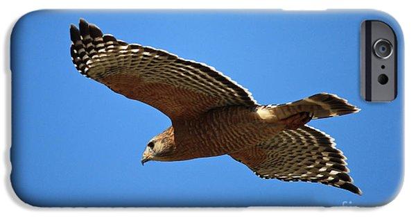 Red Shouldered Hawk In Flight IPhone 6s Case by Carol Groenen