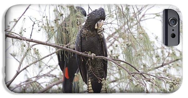Red Tailed Black Cockatoos IPhone 6s Case by Douglas Barnard