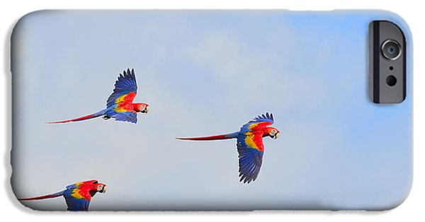 Scarlet Macaws IPhone 6s Case by Tony Beck