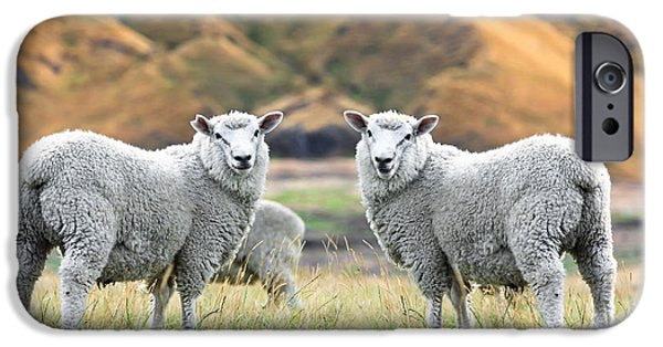 Sheep iPhone 6s Case - Sheeps by MotHaiBaPhoto Prints