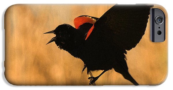 Singing At Sunset IPhone 6s Case by Betty LaRue
