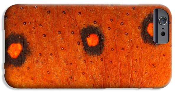 Skin Of Eastern Newt IPhone 6s Case by Ted Kinsman