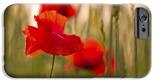 IPhone 6s Case featuring the photograph Sunset Poppies. by Clare Bambers
