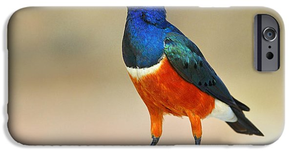 Superb IPhone 6s Case by Tony Beck