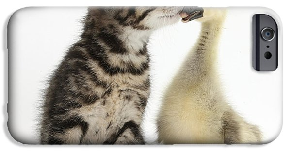 Gosling iPhone 6s Case - Tabby Kitten With Yellow Gosling by Mark Taylor