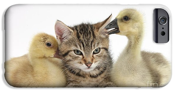 Gosling iPhone 6s Case - Tabby Kitten With Yellow Goslings by Mark Taylor