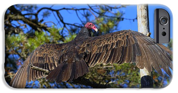 Turkey Vulture With Wings Spread IPhone 6s Case by Sharon Talson
