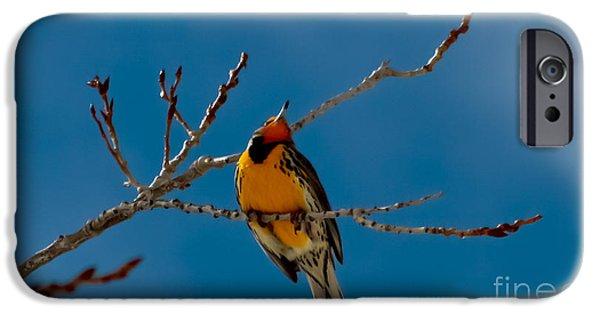 Meadowlark iPhone 6s Case - Western Meadowlark by Mitch Shindelbower