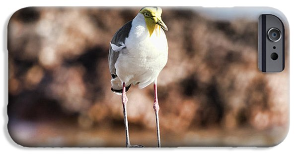 Lapwing iPhone 6s Case - Yellow Mask by Douglas Barnard