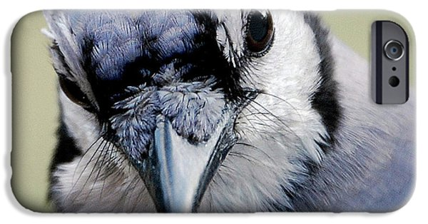 Bluejay iPhone 6s Case -  Blue Jay by Skip Willits