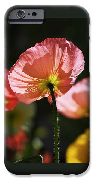 Icelandic Poppies IPhone 6s Case by Rona Black