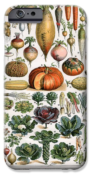 Illustration Of Vegetable Varieties IPhone 6s Case by Alillot
