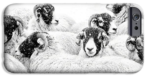 Sheep iPhone 6s Case -  In Winters Grip by Janet Burdon