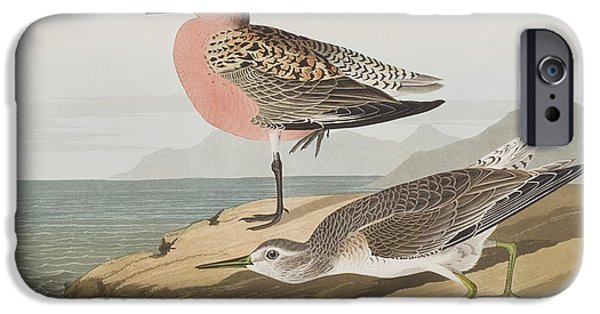 Red-breasted Sandpiper  IPhone 6s Case by John James Audubon