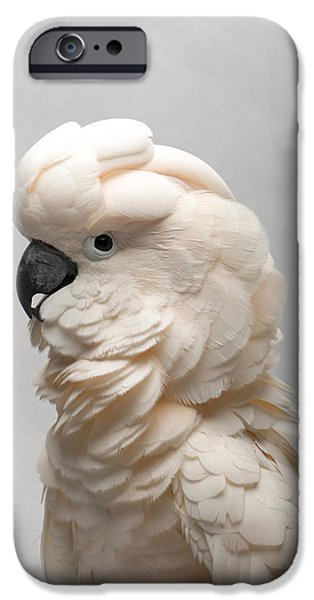 A Salmon-crested Cockatoo IPhone 6s Case