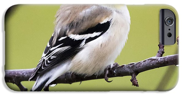 American Goldfinch IPhone 6s Case by Ricky L Jones