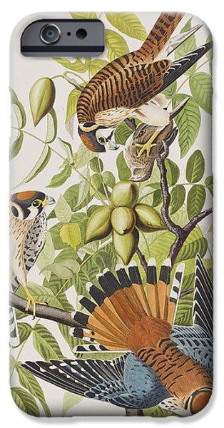 American Sparrow Hawk IPhone 6s Case by John James Audubon
