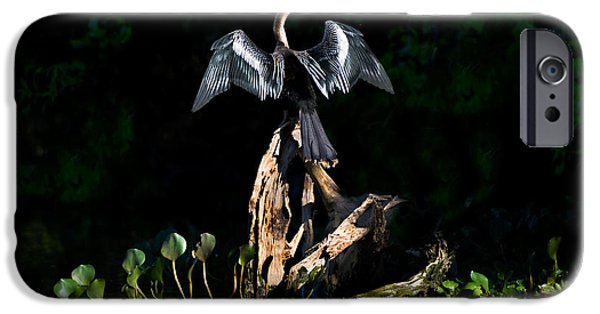 Anhinga Anhinga Anhinga, Pantanal IPhone 6s Case by Panoramic Images