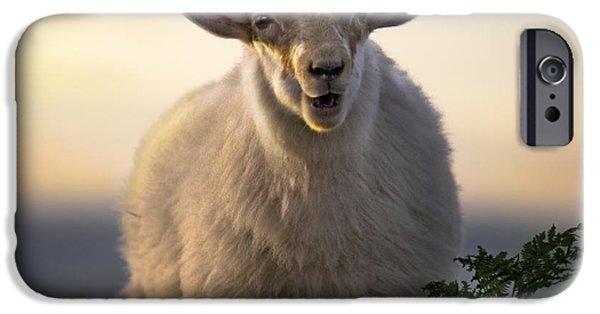 Sheep iPhone 6s Case - Baa Baa by Angel Ciesniarska