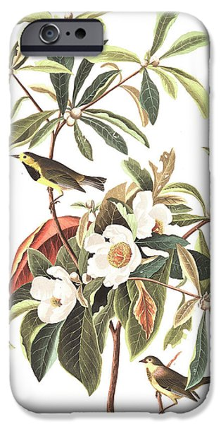 Bachman's Warbler  IPhone 6s Case